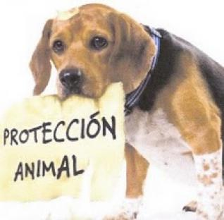 Borrador ordenanza de protección animal para Aranda de Duero